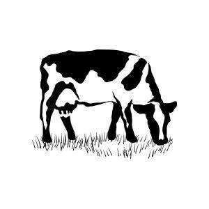 cow, milk, pastures, grazing, animal, farm, meat, yogurt, cheese,