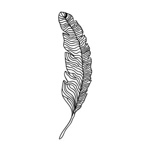 feather, bird, fly, flight, light, freedom, soul, animal, minimal, drawing, illustration,